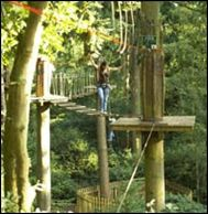 Go Ape! Dalby Forest
