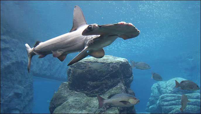 sveriges största akvarium